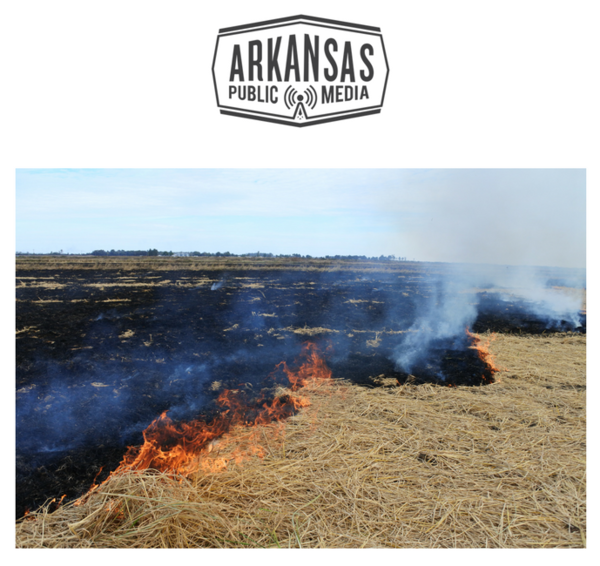 Residue is burned off a field in Mississippi County in 2017.
