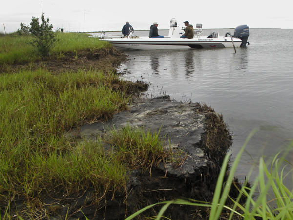 Two years later, this Bay Jimmy island is part of 200 miles of Louisiana shoreline still fouled by the BP oil spill.  A layer of oil has hardened along the coast, creating a thick layer of asphalt-like tar that's choking the edge of the marsh and accelerating an already alarming rate of coastal erosion.