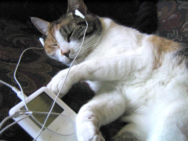 Oregon-born kitty Mercedes was the family pet of This Is NPR Editor Emily Hellewell and an advocate for her choice station, OPB. And while she's no longer with us, it should be noted that Mercedes was in fact an early adopter of podcasting, tuning in on what some may recognize as an iPod from the early 2000s. This may make you wonder, which came first, this photo or the idea for this giveaway?