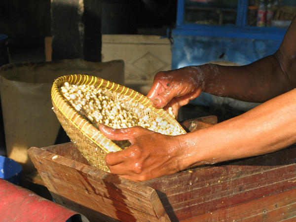 Preparing the soy beans to be fermented