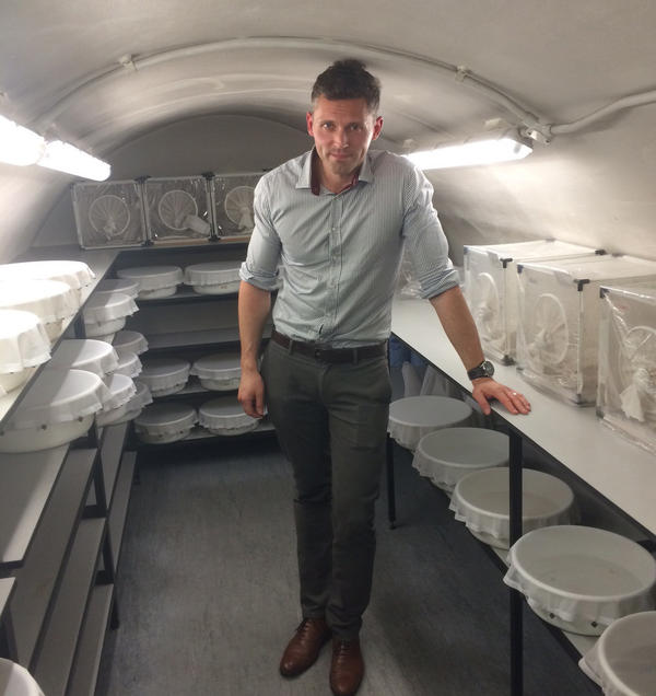 Dr. James Logan, an entomologist, studies mosquitoes from around the world in an effort to make them less dangerous. The London School of Hygiene and Tropical Medicine keeps them in a cavern beneath the streets of London. The bowls contain mosquito larvae in water, while the boxes are where the adults live.