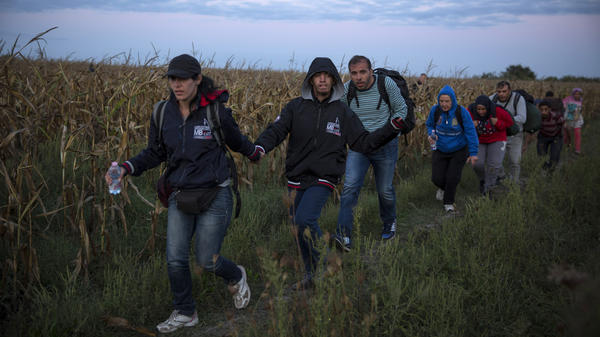 Refugees from Syria walk in Hungary near the Serbian border earlier this month.