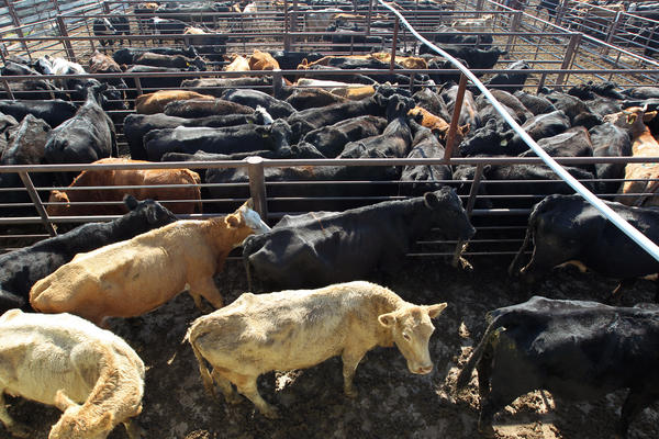 The debate about sustainable diets has focused on meat production, which requires lots of land and water to grow grain to feed livestock. It also contributes to methane emissions. But the Cabinet secretaries with final authority say the 2015 dietary guidelines won't include sustainability goals.