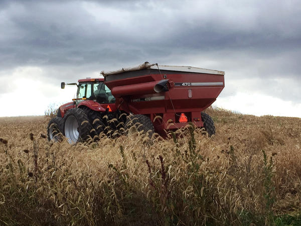 A combine harvests corn on Lucas Criswell's farm in Pennsylvania. Criswell says that cutting out neonic-treated seeds hasn't hurt his crop yields.