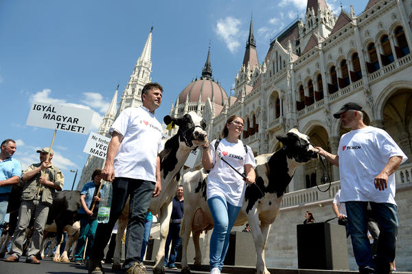 "Hungarian dairy farmers protest in front of Budapest's parliament in May. The banner reads: ""Drink Hungarian Milk!"""