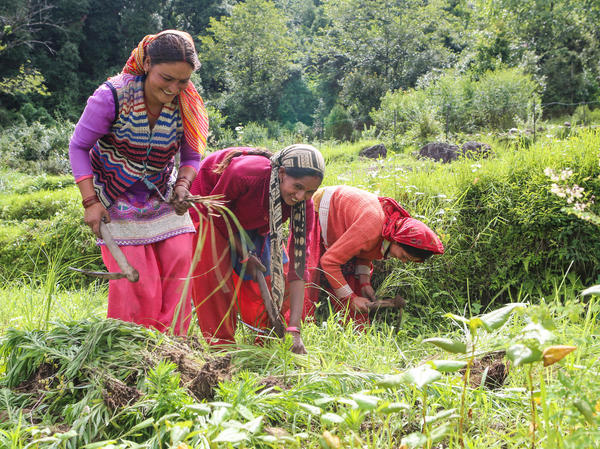 Women, who make up most of the field hands in the village of Huddu, plant grasses used for animal fodder. They report that the snowfall has decreased, a decline that villagers began noticing in the 1980s.