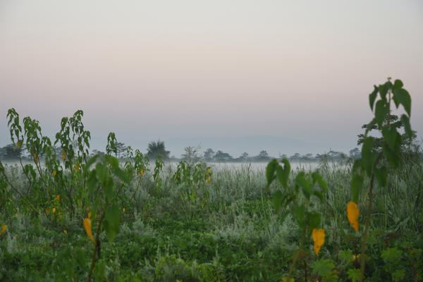 Mist rises from the tall grass that has grown over the island in the last four decades since Jadav Payeng initiated an effort to transform the sandy stretch of land into a vibrant ecosystem.