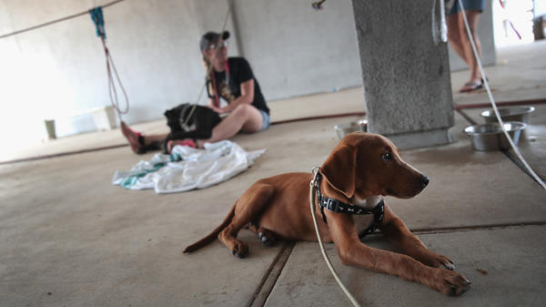 Dogs rescued from floodwater wait to be transferred to a shelter after torrential rains pounded Southeast Texas following Hurricane and Tropical Storm Harvey on Sept. 3, 2017 in Orange, Texas.