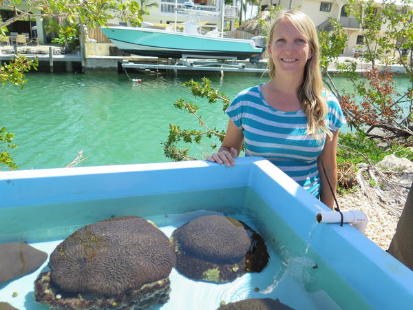 "Erinn Muller is science director at the Mote Marine Lab in the Florida Keys.  She says the lab's work to raise healthy corals is a ""beacon of hope"" for profoundly damaged reefs."