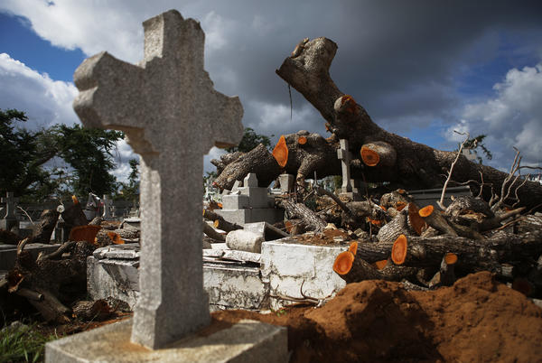 A tree toppled by Hurricane Maria rests over damaged graves in the Villa Palmeras cemetery in San Juan, Puerto Rico, in December 2017.