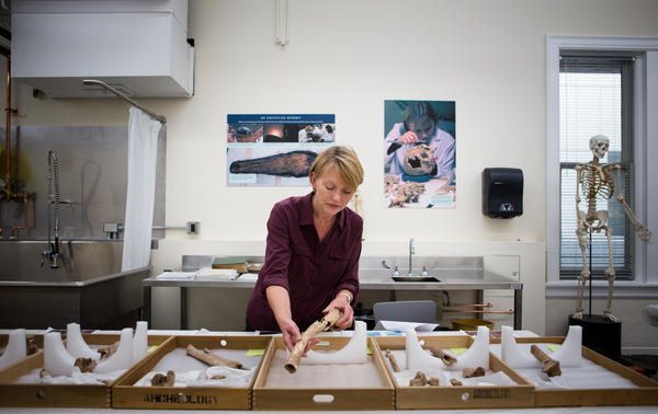 Karin Bruwelheide, a physical anthropologist with the National Museum of Natural History, handles one of the limbs uncovered from the pit. The team has identified the remains as belonging to Union soldiers from the second Battle of Bull Run.