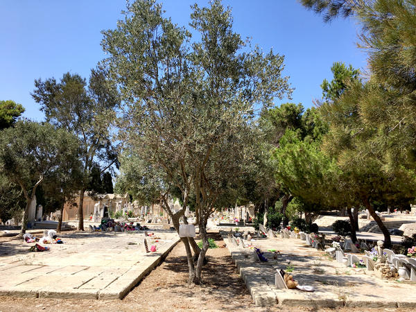 A tree marks the spot where 24 unidentified asylum seekers who drowned on April 18, 2015, are buried in Addolorata, Malta's main cemetery. A 10-year-old boy, now known as No. 132, is among those buried here.