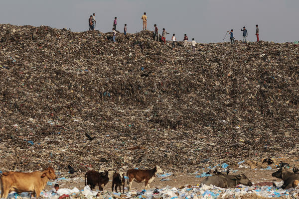 Boys play as cows graze through garbage at the Deonar landfill in Mumbai.