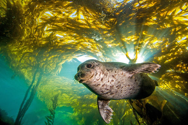 Scientists find that the whiskers of harbor seals help them distinguish predator from prey — even from a distance.
