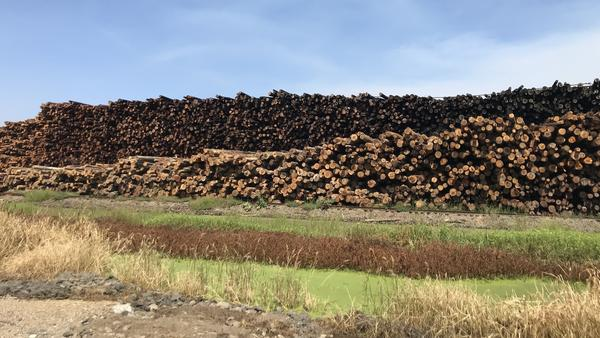 A lumber yard at one of Sierra Pacific's six California mills near Redding.