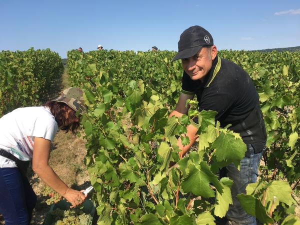 Claude Bucot and his family and friends come to Champagne every year to help with the harvest. He says they come a week or two earlier than they did 20 years ago.