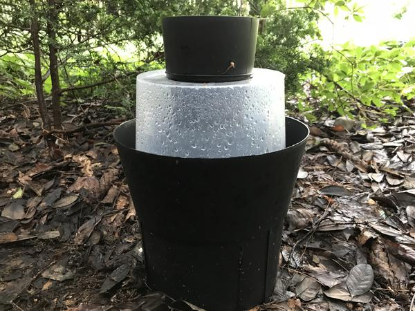 A simple trap known as a GAT may help neighborhoods get rid of the Asian tiger mosquito, an aggressive biter.