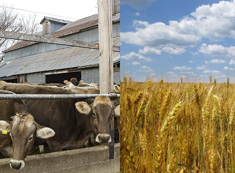 Wheat and dairy producers could be the big winners in the new North American trade deal.