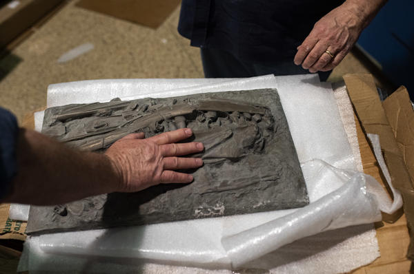 The exhibition at the Smithsonian National Museum of Natural History will allow visitors to interact with history, such as this touchable panel of mosasaur fossils.