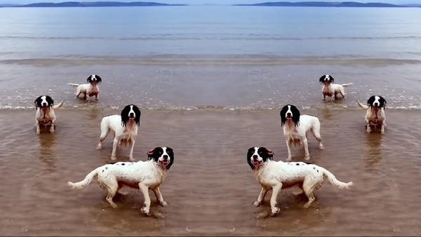 Dogs mingle with the music of Handel in Tilda Swinton's new video.