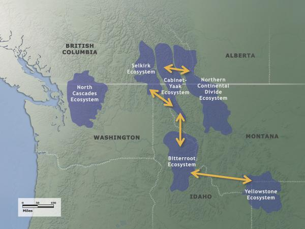 Pathways connecting North American grizzly bear habitats.