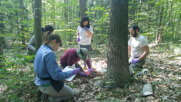 Biologist Jeff Blanchard, kneeling at center in hat, collects soil samples surrounded by students at Harvard Forest.