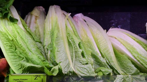 The Centers for Disease Control and Prevention traced an ongoing E. coli outbreak to the Central Coastal region of California. If you're sure your lettuce was grown elsewhere, you can eat it.
