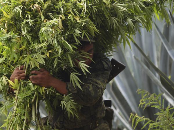 A soldier carries marijuana plants to be destroyed after a large plantation was seized in Hostotipaquillo, Mexico, in 2012. A new bill in Mexico's Congress would legalize pot, and with its authors' party in the majority, it is likely to pass.