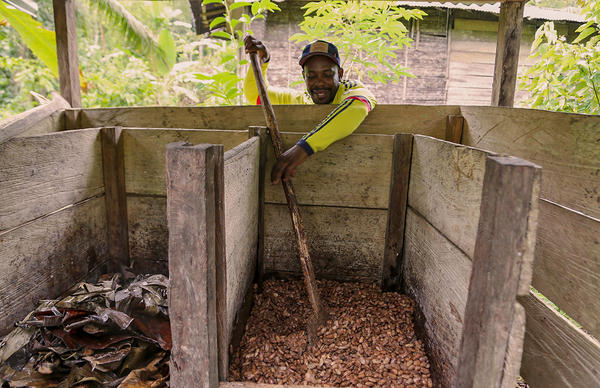 <strong> </strong>Fidel Palacios shows how cacao beans need to be mixed during the fermentation process.