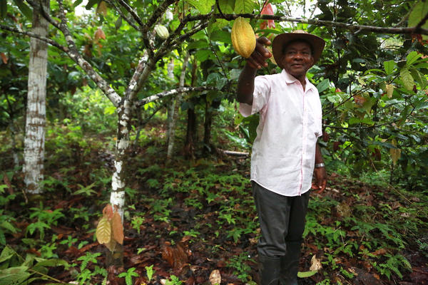 José Palacios stands by a cacao tree on his property in Guarandó, a small river community in the western Chocó department of Colombia.