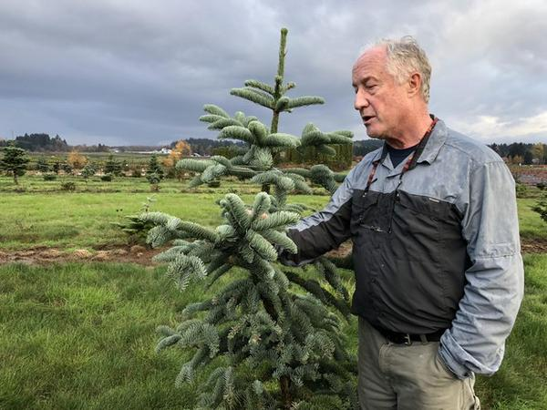 <p>Chal Landgren is a Christmas tree expert with Oregon State University.</p>