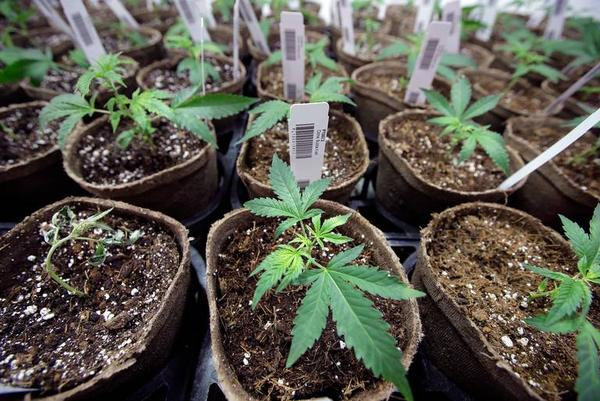 A legislative committee approved an additional $13.3 million in funding for the state's Office of Medical Marijuana Use Thursday, despite concerns over delays in implementing a bill that legalized cannabis for medical use last year.