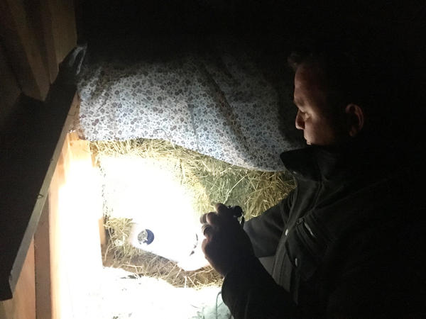 Mike Travers, exterminator at EcoGeek pest control, checks on rat traps.