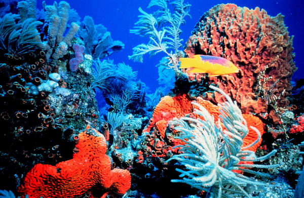 Coral reefs face numerous threats and some chemicals used in sunscreens have been found to harm corals.