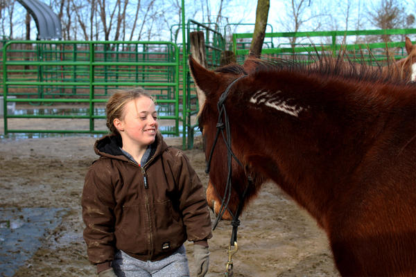 Katelyn Fisher works with Abbie, the mustang she and her father adopted from the Legendary Mustang Sanctuary near Edwardsville. The freezebrand on Abbie's neck indicates that she was a wild horse rounded up by the federal Bureau of Land Management.