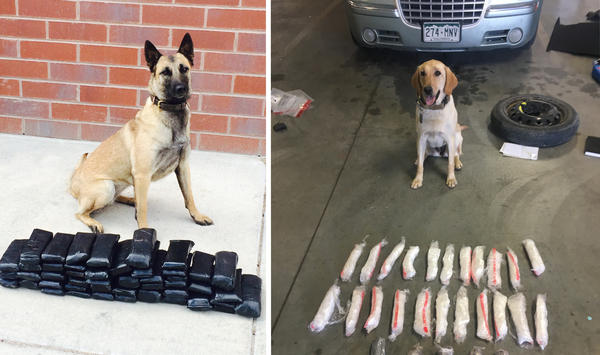 Widget (left) poses with $460,000 in contraband from a 2015 related bust. Sage poses with bags of heroin seized during a 2018 drug bust. Both are Pueblo Police Department Special Investigations / K9 Detectives.
