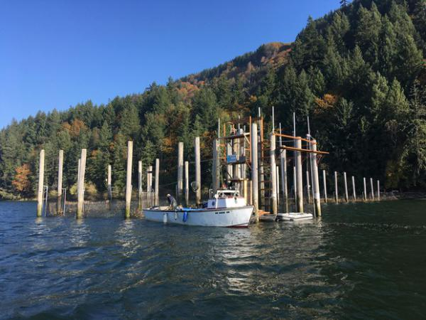 <p>An experimental fish trap on the lower Columbia River has repurposed an old fishing method in search of a more sustainable way to catch salmon.</p>