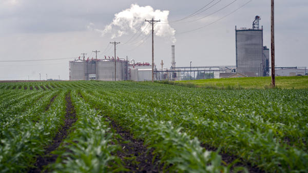 Young corn plants grow next to the Guardian Energy ethanol plant in Janesville, Minn. Five years ago, the U.S. government projected that in 2012, ethanol production would use up 30 percent of the nation's corn supply. Last year, it used 40 percent.