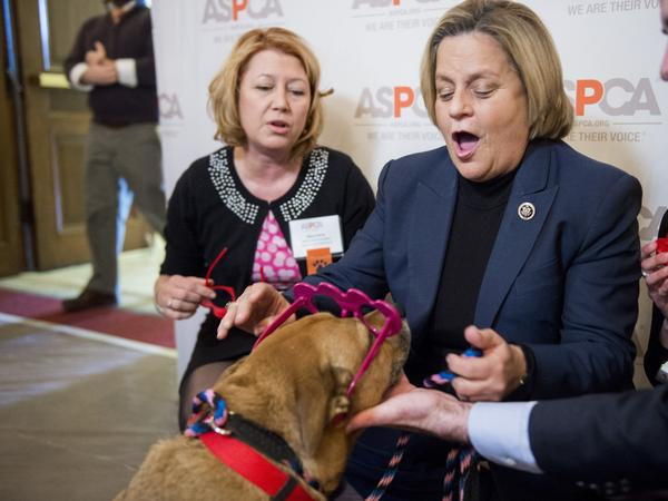 Rep. Ileana Ros-Lehtinen, pictured right, announced Sunday that she'll retire from Congress at the end of her term next year. In this 2016 photo, Ros-Lehtinen, puts heart glasses on a dog at the ASPCA's Paws for Love Valentine's Day pet adoption event at the Capitol.