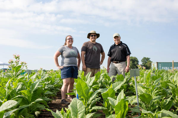 Scientists Amanda Cavanagh (left), Paul South (center) and Donald Ort (right) found tobacco plants engineered to shortcut photorespiration are about 40 percent more productive in real-world field conditions.
