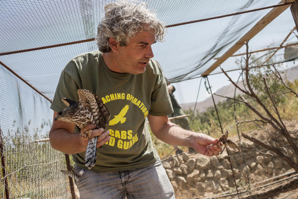 Axel Hirschfeld looks at the remains of dead birds while holding a Levant sparrowhawk. The bird was found locked in a small enclosure without food or water in a field used by poachers in the town of Ras Baalbek, Lebanon, in September.