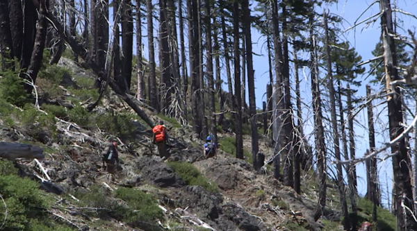 <p>A volunteer trail crew for the Siskiyou Mountain Club hikes through the Kalmiopsis Wilderness.</p>