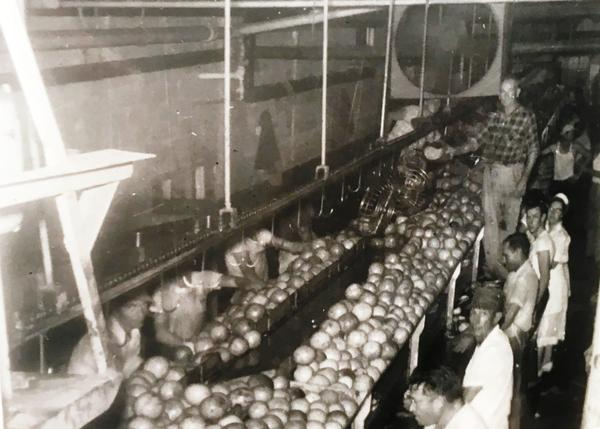 A snapshot of the Griffin family packing house, undated.