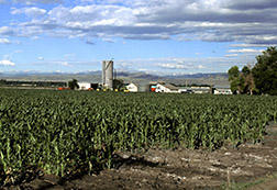 According to one study by the University of New Hampshire, rural areas that depends on farming have seen the most depopulation.
