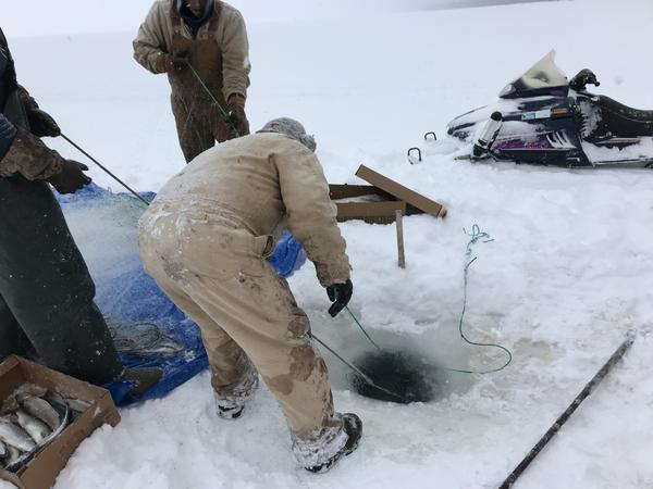 Jacques LeBlanc, a commercial fisherman from the Bay Mills Indian Community, pulls a gill net out of the ice on eastern Lake Superior.