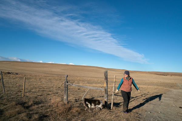 Trina Jo Bradley at the gate to one of her ranch's pastures. Like most ranchers here, she's been largely accommodating of the grizzlies as their population has rebounded and they've spread off of the neighboring mountains into the more populated plains.