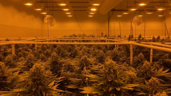 Sira Naturals marijuana growing facility in Milford, Mass.