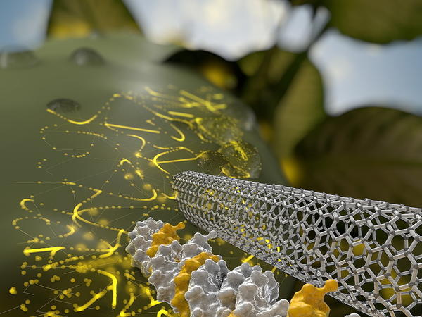 An artist's rendering shows a needle-like carbon nanotube delivering DNA through the wall of a plant cell. It also may be possible to use this method to inject a gene editing tool called CRISPR to alter a plant's characteristics for breeding.
