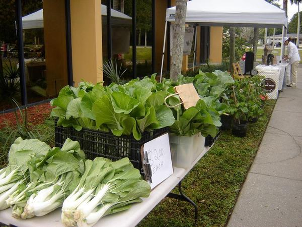 Local Produce at the Alliance for the Arts Greenmarket