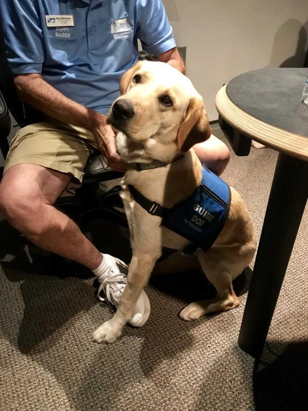Culligan, a puppy-in-training, waits patiently in the studio during the show.